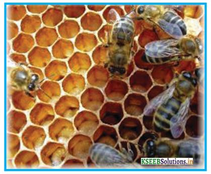 How do Bees Make Honey Summary in English