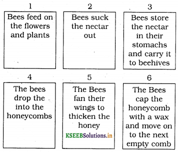 KSEEB Solutions for Class 6 English Prose Chapter 3 How do Bees Make Honey 4